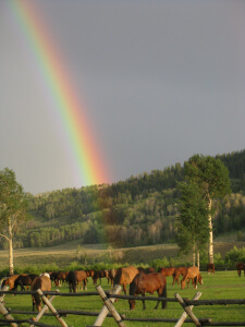 Rainbow over Goosewing Ranch