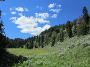 Goosewing Ranch, Riding the Meadows 3