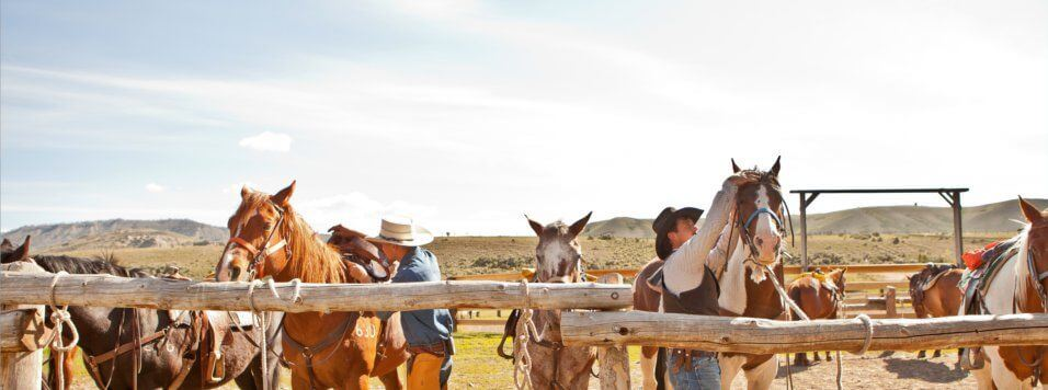 Goosewing Ranch and the horses with the cowboys