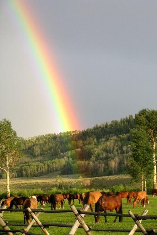 After rain showers comes a rainbow-the horses are the proverbial pot of gold at the end of this rainbow!