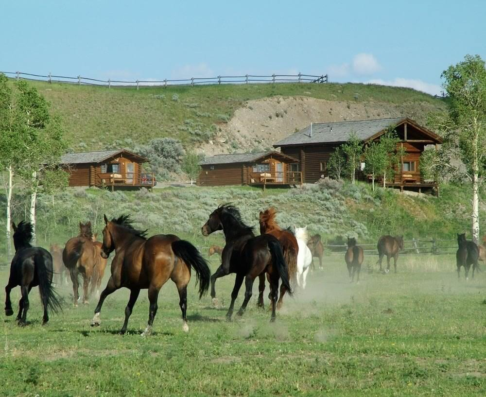 Jackson Hole, Wyoming is home to Jackson and also places on the road less traveled by such as Goosewing Ranch. Horses kicking up a storm.