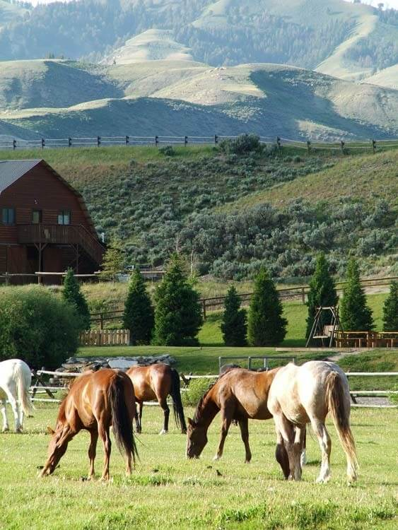 The horses and the Gros Ventre Valley await for your family reunion in Jackson Hole, Wyoming at Goosewing Ranch.