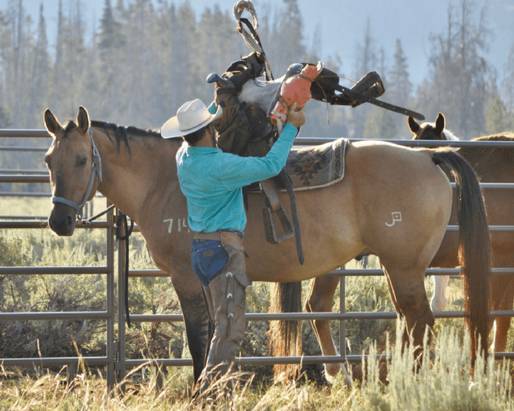 Jackson Hole vacation | Saddling up horses for the day's ride. Glamping guests will learn how to tack their horses.