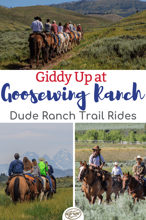 Trail riding on a dude ranch vacation? One of the best ways to see the surrounding national parks/forests and explore nature & wildlife! Saddle up with us and learn the ins and outs of how Goosewing Ranch runs its trail rides in this scenic part of Wyoming. #JacksonHole #duderanch #trailriding #horseback #Wyoming