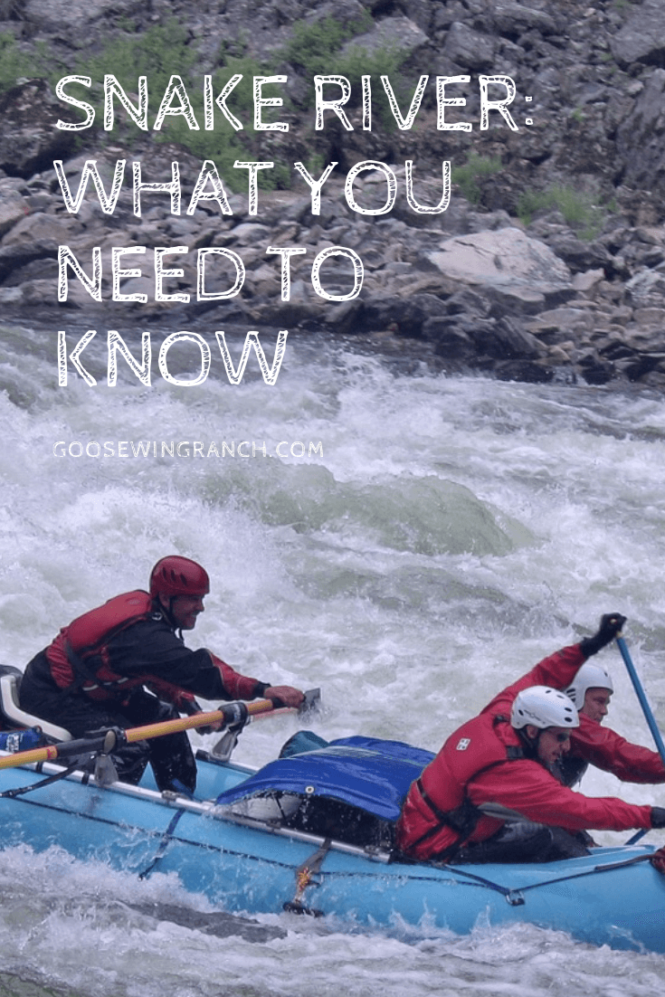 Snake River offers rafting, scenic floats, and fishing just to name a few popular summer activities. What you need to know before you explore Snake River in jackson Hole, Wyoming and beyond. #JacksonHole #SnakeRiver #GrandTeton #nationalpark #Wyoming