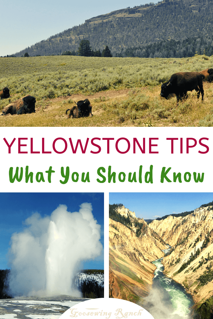 We're sharing our Yellowstone tips: everything you should know about lodging, tours, must see spots, and best ways to spot wildlife. This massive first national park has more to offer for travelers: from waterfalls, hot springs, and geysers to bison, bears, and wolves. #Yellowstone #nationalpark #Wyoming #nationalparks #yellowstonetips